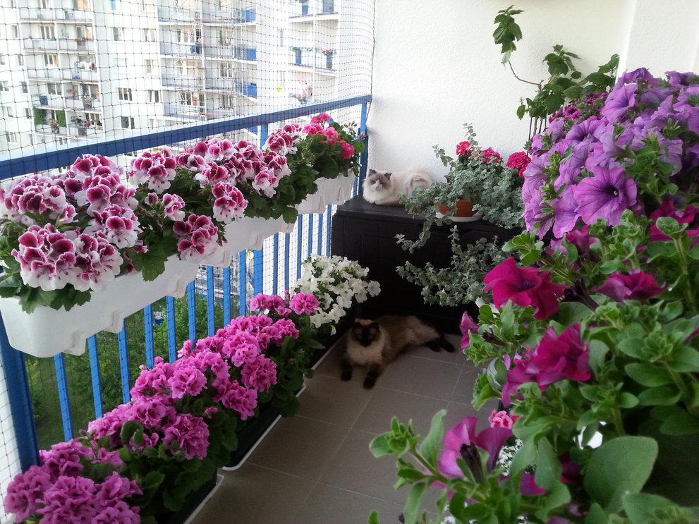 Kwiaty Na Balkon Jakie Wybrac Na Parapet Od Strony Zachodniej A Jakie Na Parapet Od Wschodu Blockpol Pl