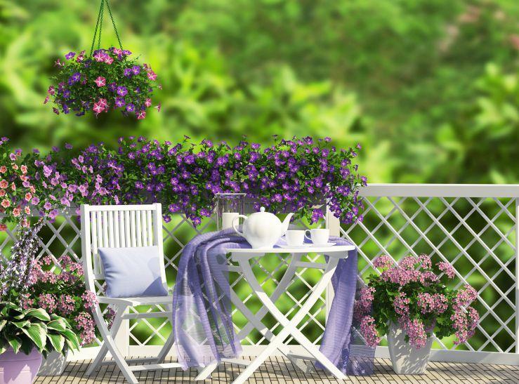 Kwiaty na balkon – jakie wybrać na parapet od strony zachodniej, a jakie na parapet od wschodu?